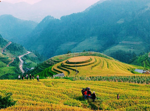 Trải nghiệm 3 cung đường ngắm mùa lúa vàng ở miền núi phía Bắc