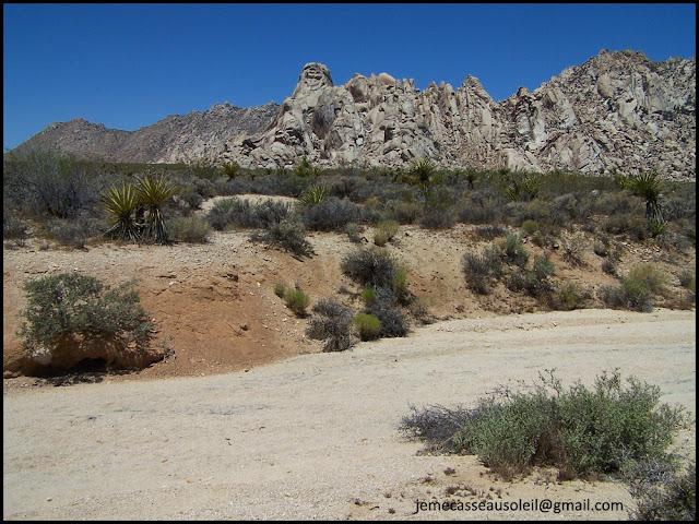 Réserve de Mojave en Californie