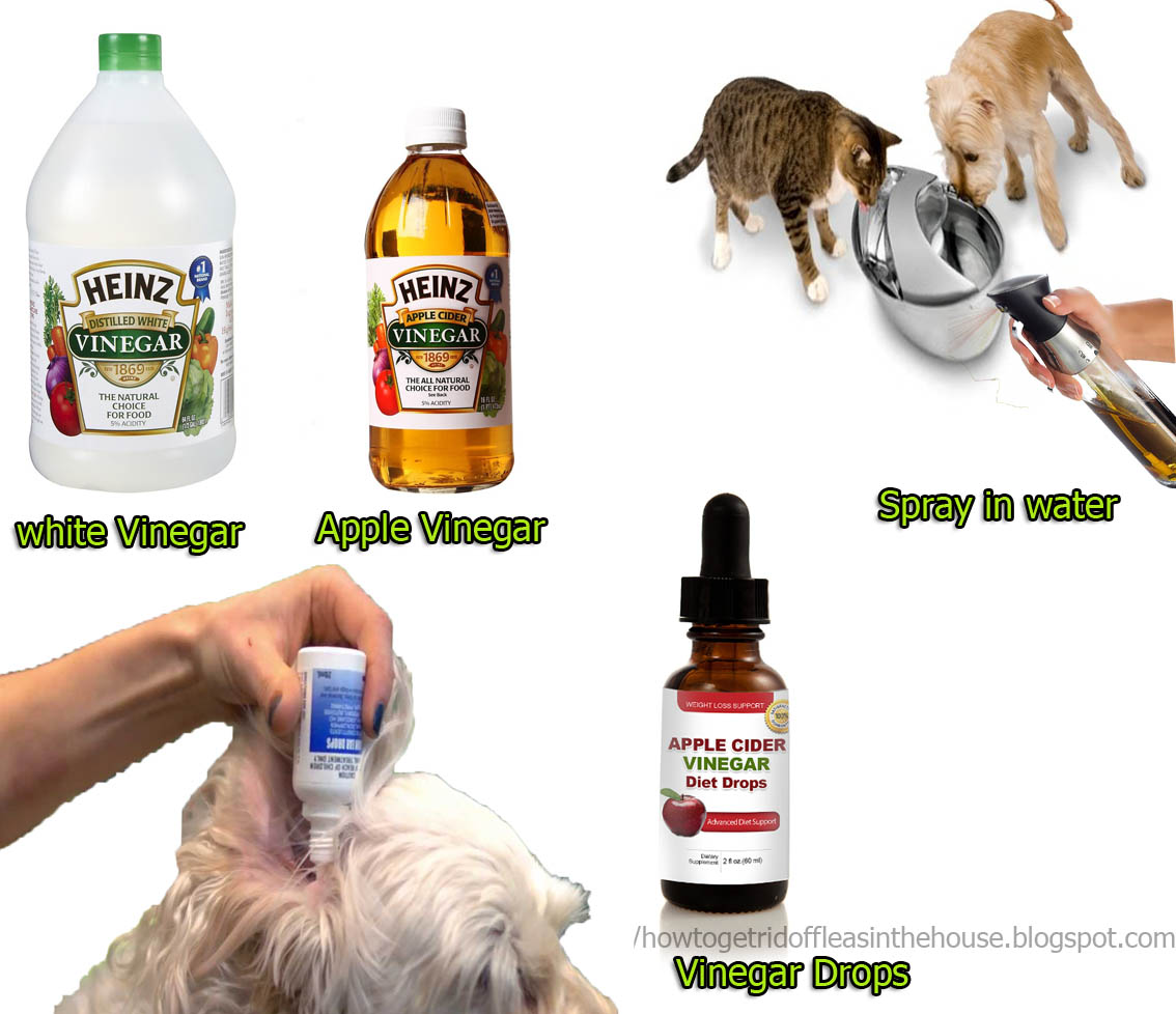 2 Home Remedies Kill Fleas Easily Pets