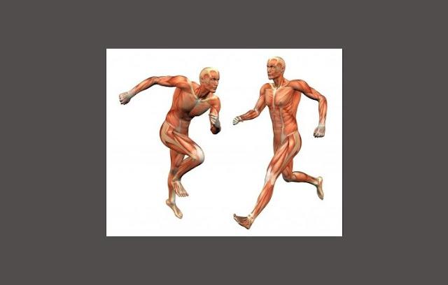Pengertian Otot, Struktur Otot, Fungsi Otot, Jenis Otot