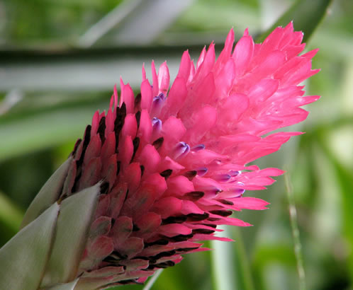 Beautiful Bromeliaceae