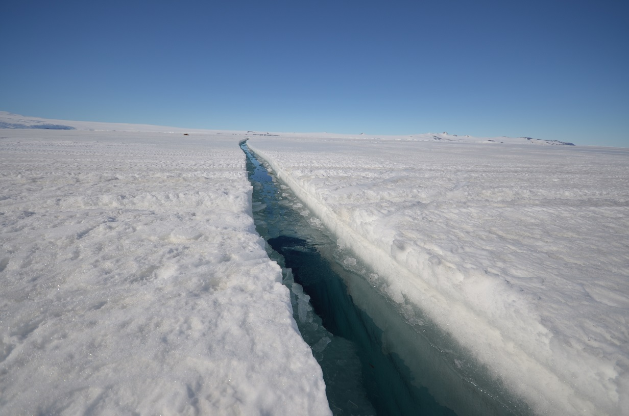 Antarctica A Journey Over And Under The Sea Ice Whale