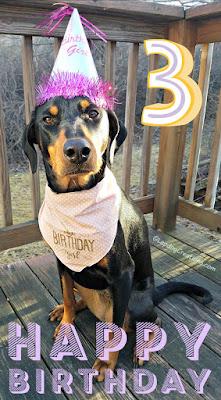 dog birthday hat doberman rescue mixed breed