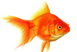 En şirin japon balığı isimleri