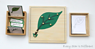 Parts of a leaf learning activities and free printables.