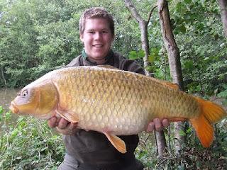 Gambar Ikan Mas Besar