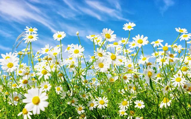 Bunga Cantik Dan Indah Untuk Walpaper LVeza