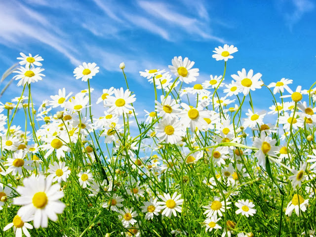 Beautiful And Beautiful Flowers For Wallpaper