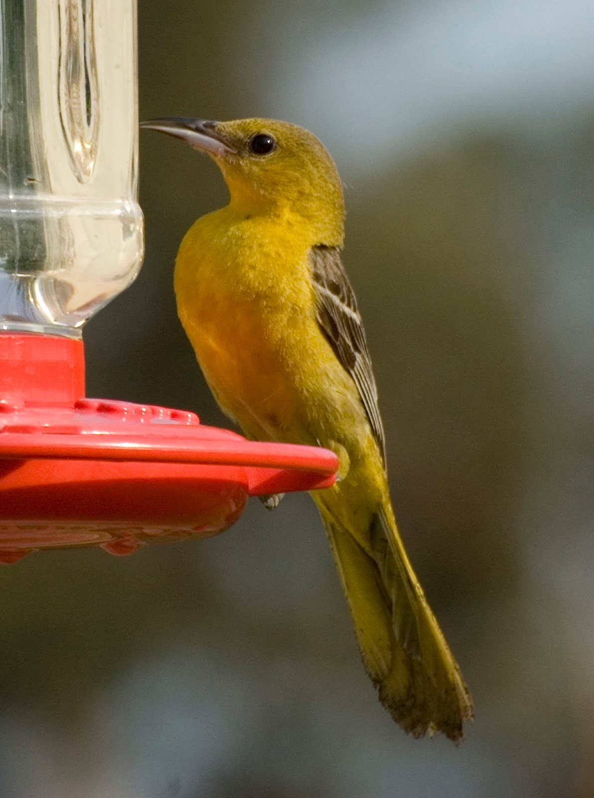 SW Louisiana Birds: What Will Winter Bring?