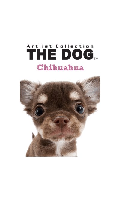THE DOG Chihuahua