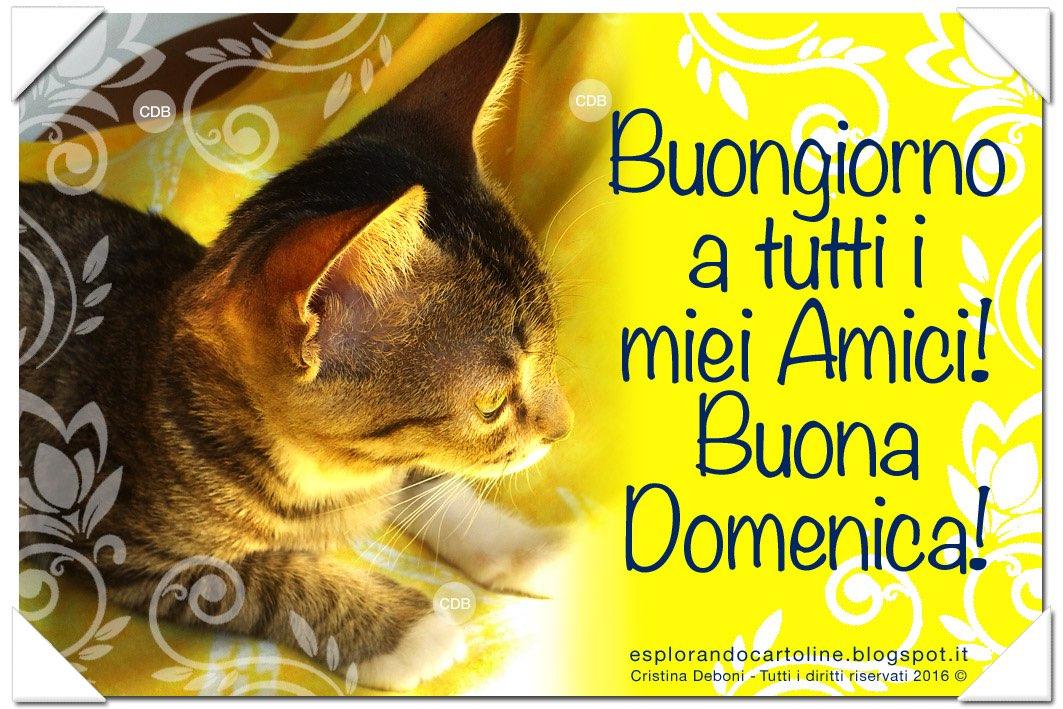 Cdb Cartoline Per Tutti I Gusti Cartolina Per Gli Amanti Dei Gatti