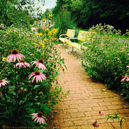 yellow benches and cornflowers