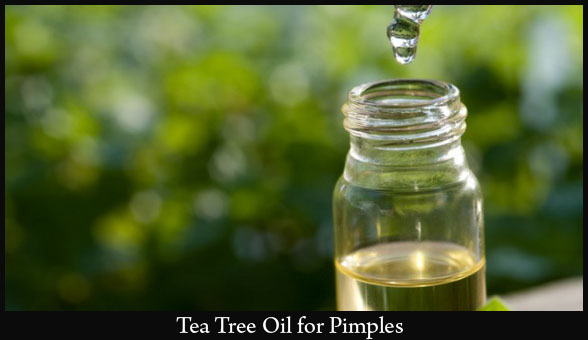 tea-tree-oil-to-get-rid-of-pimples