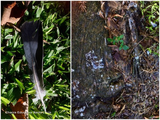 Plumas y excremento de aves - Chacra Educativa Santa Lucía