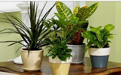 5 Tanaman Hias Yang Mampu Menetralisir Racun Udara Dalam Rumah