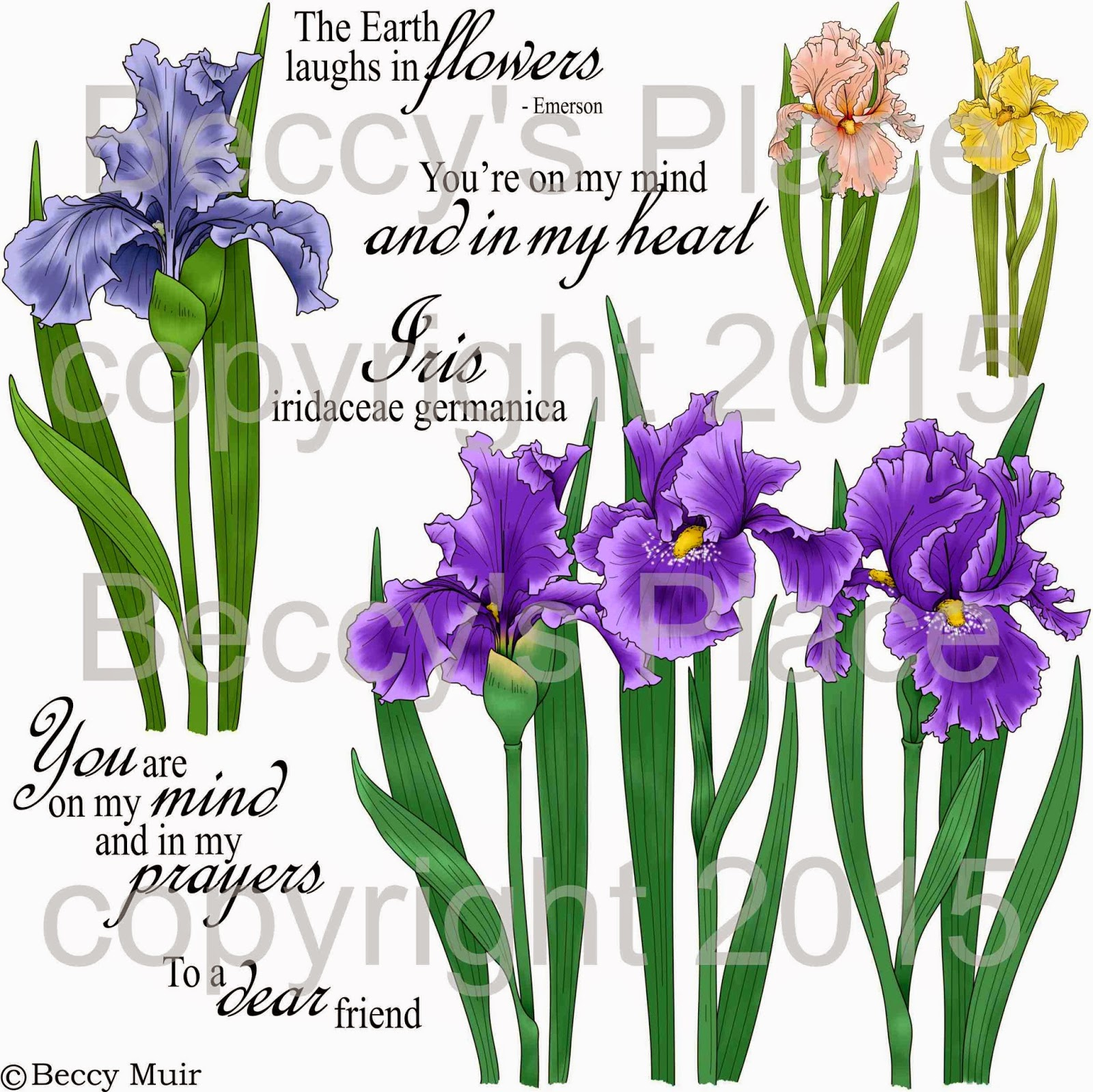 Beccy S Place New Release Iris Garden