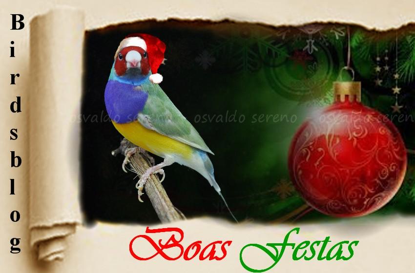 Resultado de imagem para Boas Festas  - Birdsblog