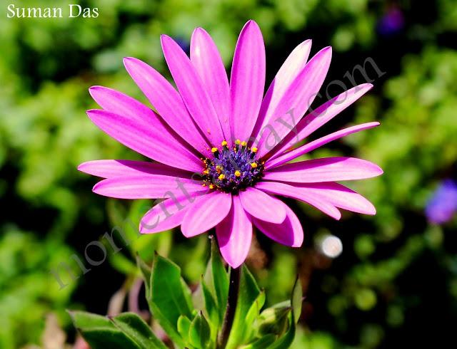 bright petals momentsatbay