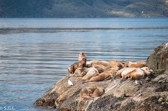Isla de los lobos en el canal Beagle. Ushuaia