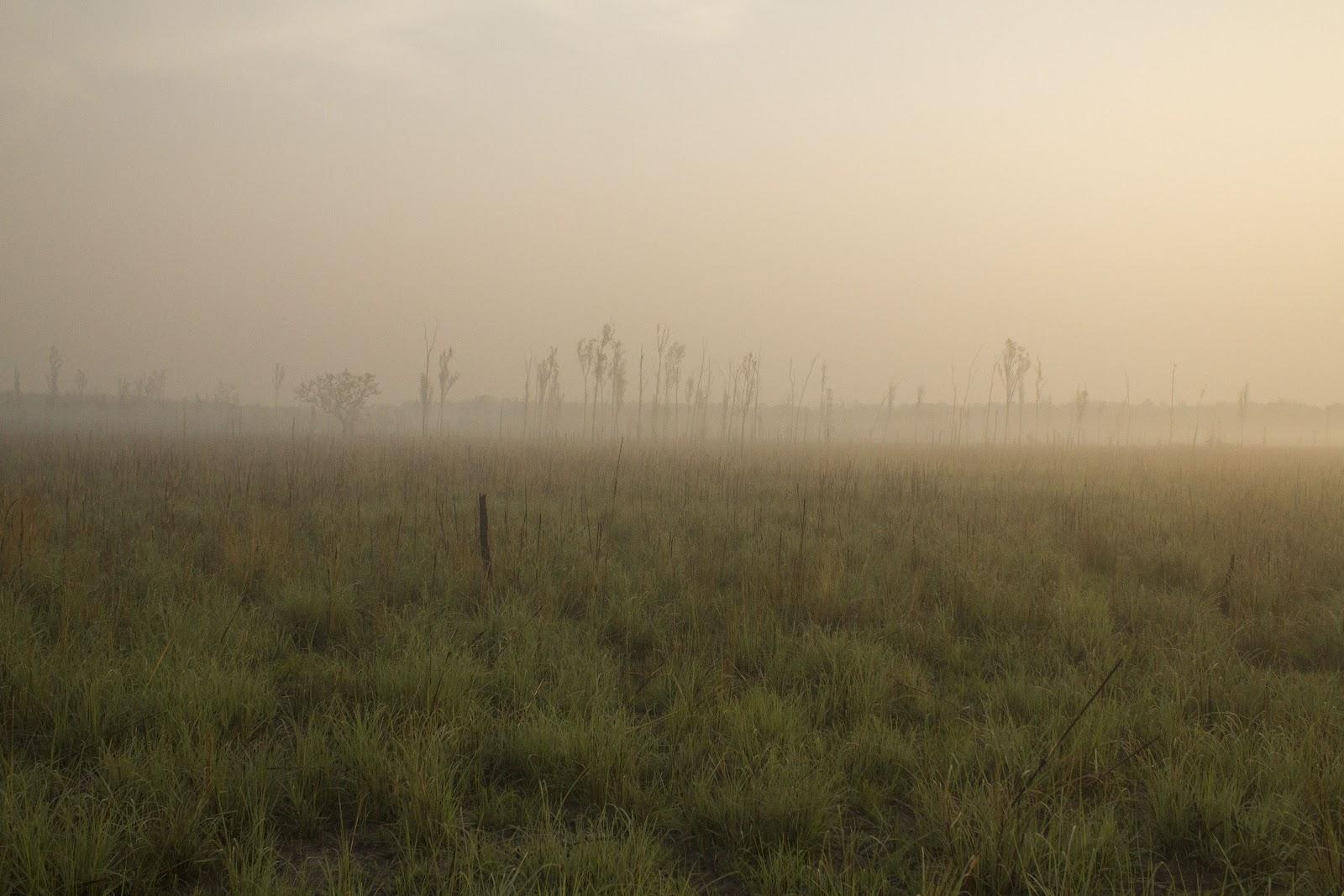 Dudhwa+Landscape+5.JPG