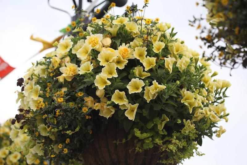 Oppsiktsvekkende Garden Living: Ampeltips! - Slik får du flotte ampler GG-34