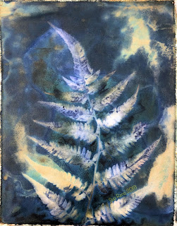 Wet cyanotype -Sue Reno_Image 509