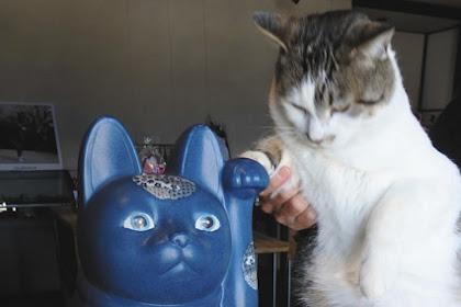 びんずる尊猫 瑠璃寺