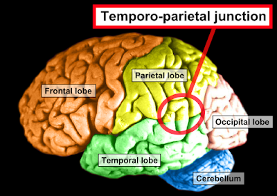 Temporo-parietal-junction-image