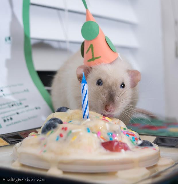Jasper eating his birthday cake
