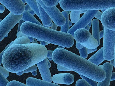 bacillus bacteria for good health