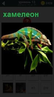 На ветке среди листьев ползает хамелеон, который в зависимости от обстоятельств меняет свой цвет