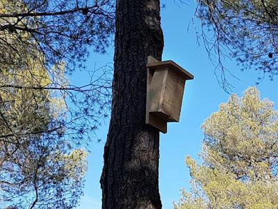 Caja nido para agateador común