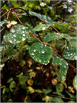September 30, 2018 The rainy season has started and on our last day in Victoria we walked under a gentle mist.