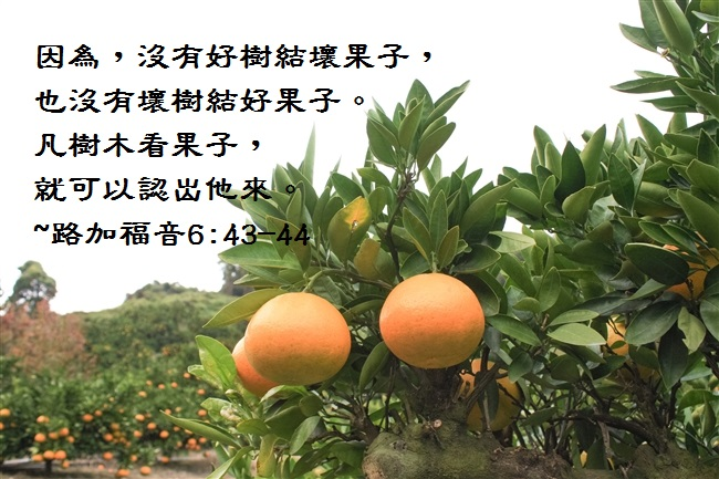 Image result for 福音事工所结的果子--- 相爱
