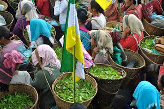 GJM-affiliated Darjeeling Terai Dooars Plantation Labour Union (DTDPLU)