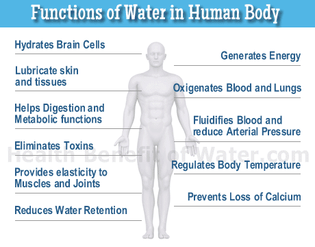 an analysis of the function of fats in a normal human body List of internal human organs and their functions with pictures sortable table of the largest human organs, where they are located in the human body, what they look like, and what they do.