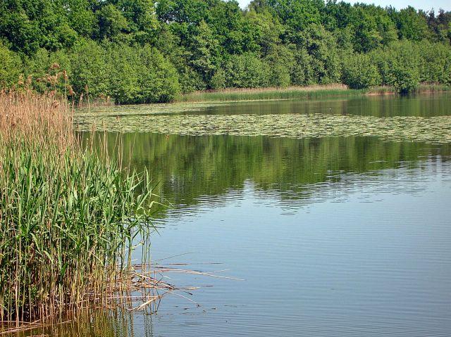 wędkarstwo, hobby, woda, wypoczynek