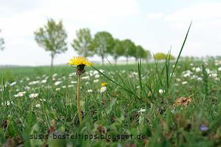 Bienenperspektive einer Löwenzahnblüte, Foto von unabhängiger Stampin' Up! Demonstratorin