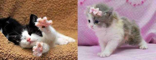 kedilerin-karakteri