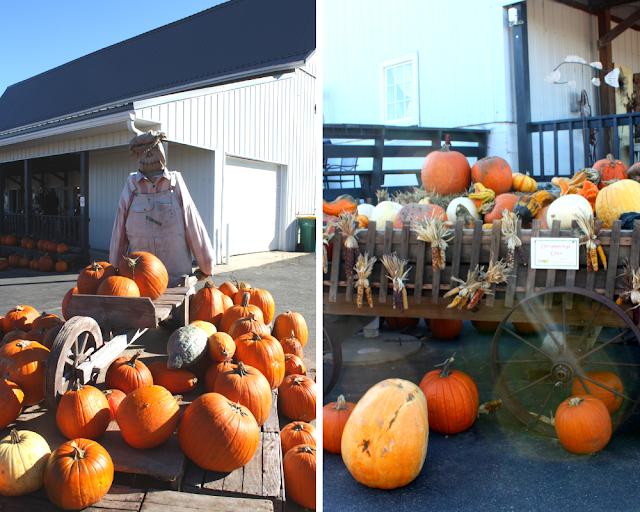 Pumpkins, gourds and scarecrows at Skelly's Farm Market in Janesville, Wisconsin