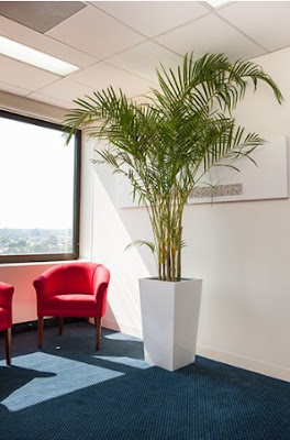indoor plants has widely increased due to the awareness it is indeed a good practice that everybody should inculcate