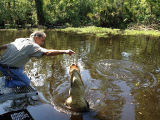 alligator tours in new orleans