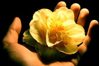 imagen manos+flor+amistad