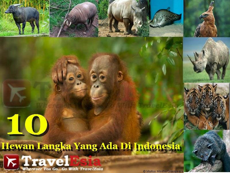 400+ Gambar Hewan Langkah Yang Ada Di Indonesia Gratis