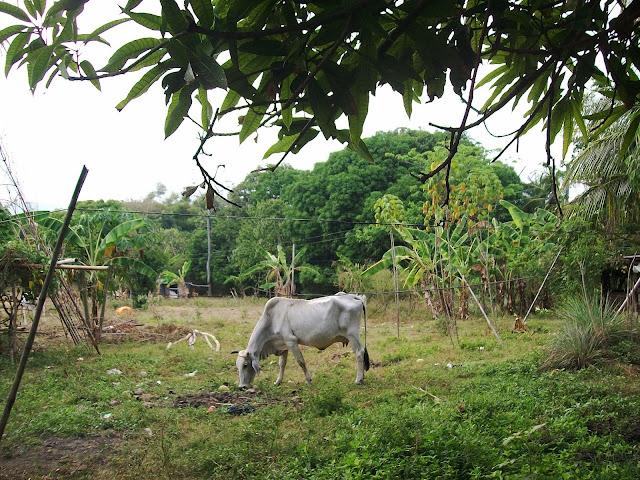 San Juan, Batangas