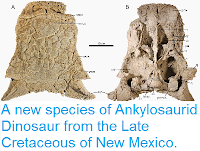 http://sciencythoughts.blogspot.co.uk/2014/10/a-new-species-of-ankylosaurid-dinosaur.html