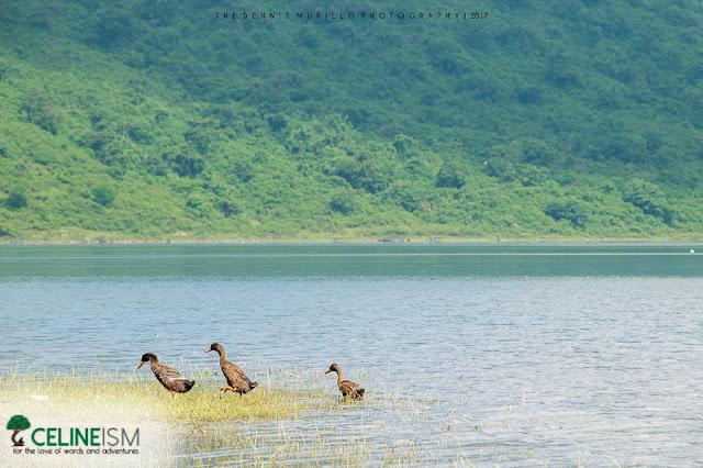 lake tambo diy guide