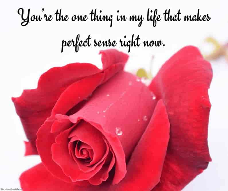 good morning text for her crush with red rose