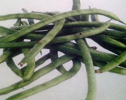 Segudang Manfaat Mengkonsumsi Sayur Buncis Serta Efek Sampingnya Bagi Kesehatan
