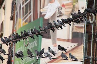 Populistisia lintuja